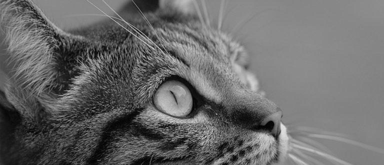 Article : L'hommage à mon chat